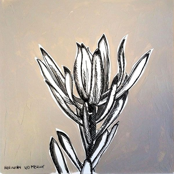 Title: Fynbos:  Table Mountain Fynbos 8 Medium: Pen-and-Ink drawing on paper with oil paint background Size: 200 x 200mm