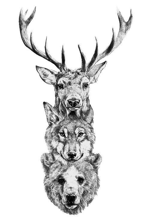 deer wolf bear illustration