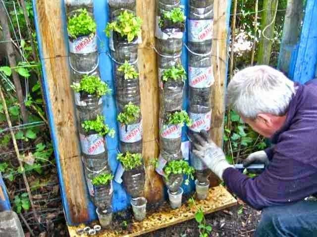 Proyecto Cultivos Alternativos Jardin Vertical Con Botellas Huertos Verticales Huertos Verticales Con Botellas