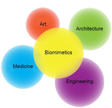 Figure 1 The area of applications in biomimetics.