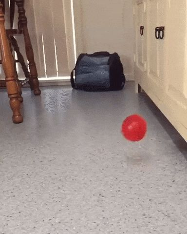 BALL funny pics, funny gifs, funny videos, funny memes, funny jokes. LOL Pics app is for iOS, Android, iPhone, iPod, iPad, Tablet