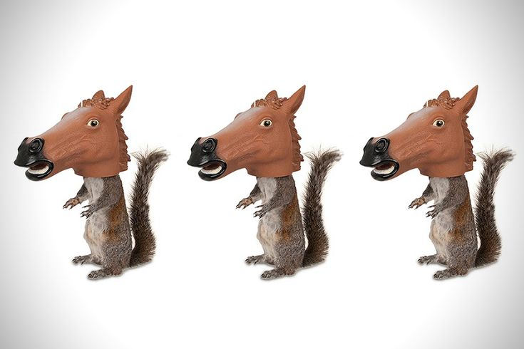 Squirrel Feeder Horse Head Woodworking Projects Plans
