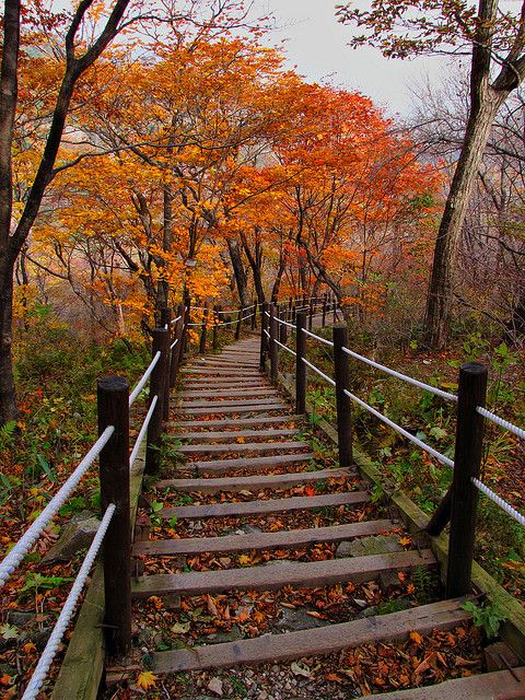 Fall leaves on the path to Baemsagol valley in #Jirisan National Park, Korea