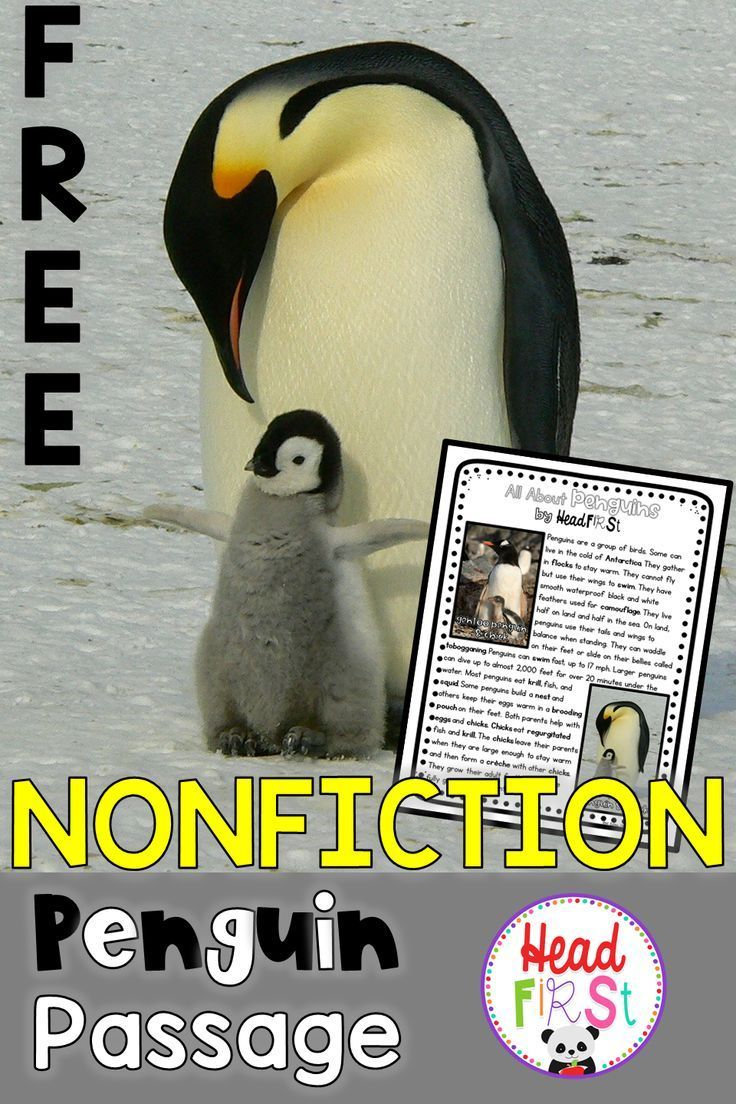 small resolution of FREEBIE Penguin Nonfiction Guided Reading Comprehension and Fluency Passage    2nd gr…   Penguin reading comprehension