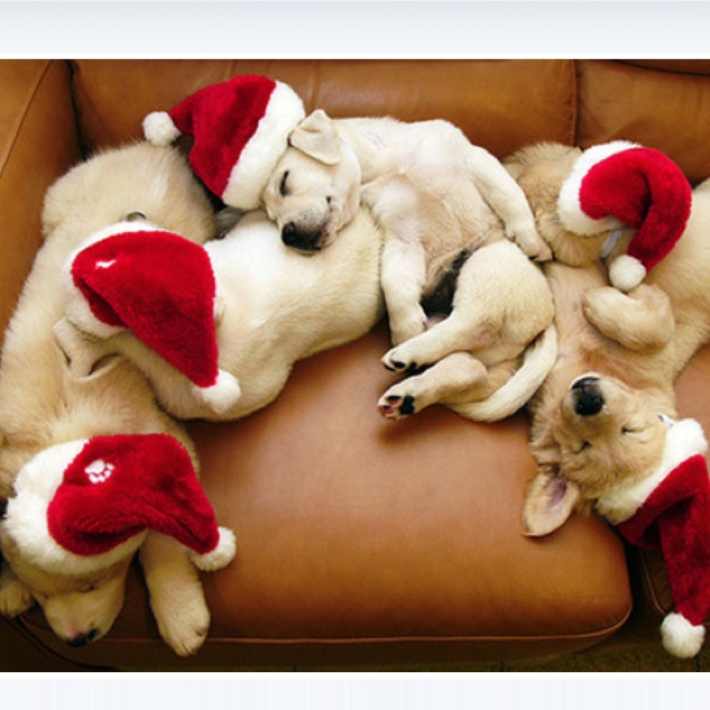 : The Holidays, Santa Hats, Christmas Presents, Santa Baby, Happy Holidays, Christmas Puppies, Merry Christmas, Animal, Santa Puppies
