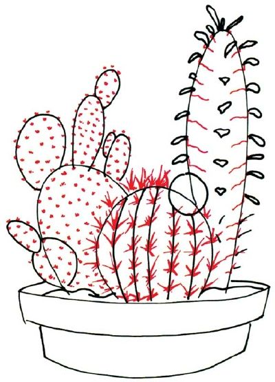 Cactus Flower Line Drawing : How to draw cactus and