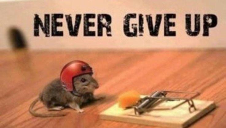 [Text] Never give up! http://bit.ly/2mvUxoF #motivation