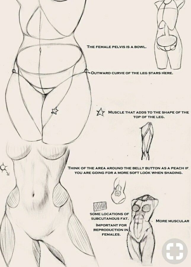 Pin By William Dickerson On Art Studies Female Anatomy Pinterest