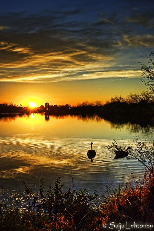 Sunset over pond and ducks