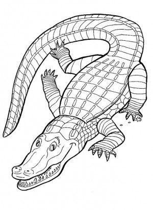 17 mejores imágenes de Crocodiles coloring book en Pinterest ...