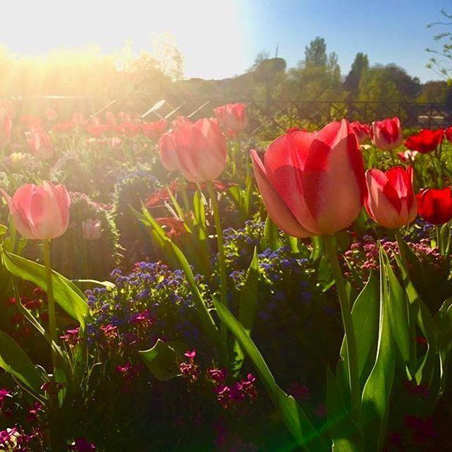 A Primavera na Europa é uma coisa mágica!!! 😍😍😍E amanhã às 18h00 teremos um post novo no portal 1001 Dicas de Viagem com 5 motivos para você escolher a primavera para viajar para a Europa! 😉😉😉 Esse post faz parte de uma blogagem coletiva da galera da RBBV e está mto bacana, com informações sobre a primavera em vários destinos e atrações pelo mundo! ☺️☺️☺️ Vale a pena conferir hein! ---------------------------------------------------- 📍Besançon, França 🇫🇷. 📸 Foto: NiKi Verdot…