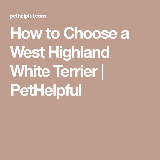 How to Choose a West Highland White Terrier | PetHelpful
