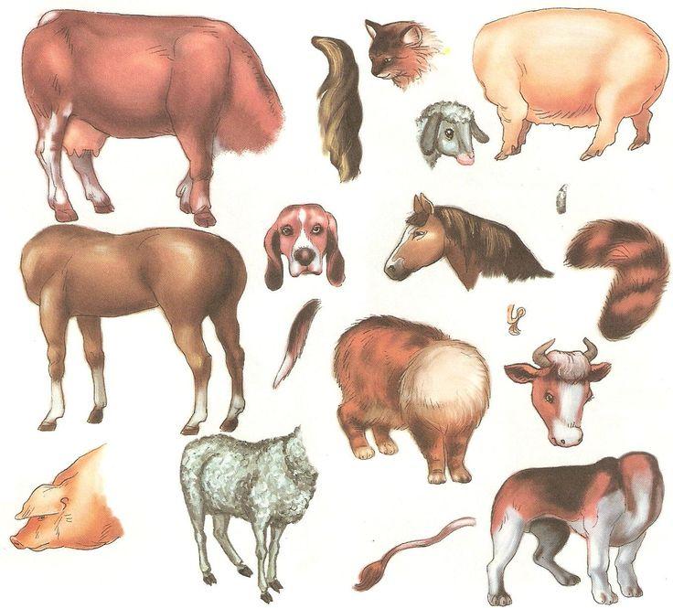 Картинки с изображением хвостов диких животных