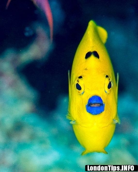 1000+ images about Exotic sea creatures on Pinterest