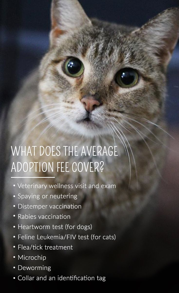 Did you know? Adoption fees at shelter and rescue