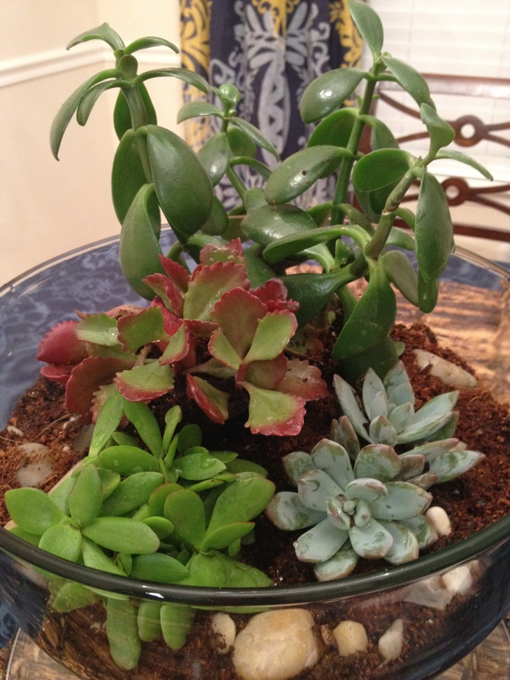 My very first succulent garden. I'm so proud...
