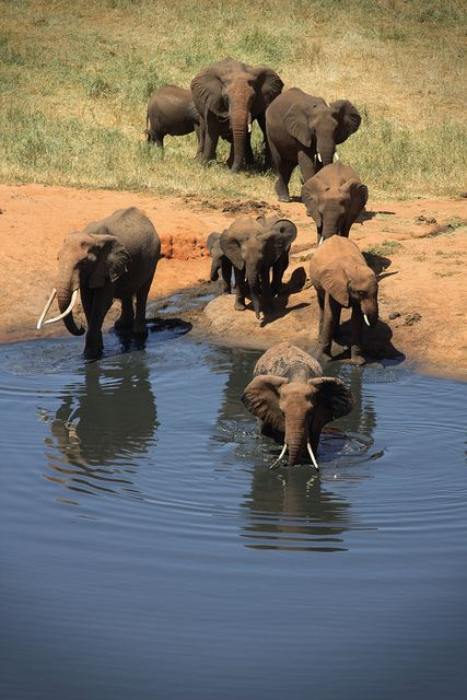 Every one takes a turn at the water hole These guys go first