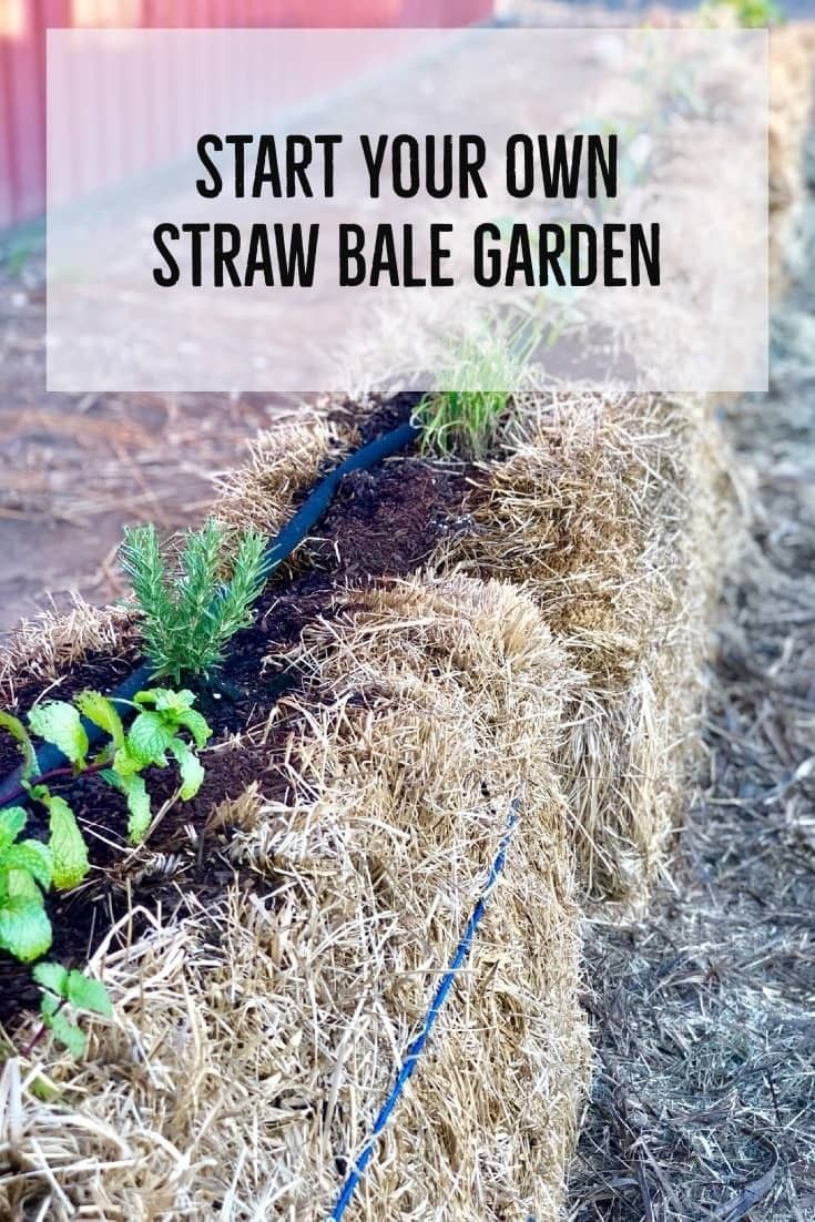 ストローベイルガーデンの作り方 Straw Bale Gardening Straw Mulch Growing Potatoes