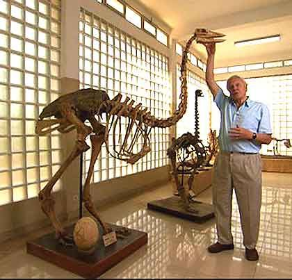 Sir David Attenborough with a skeleton and egg of the extinct Elephant bird from Madagascar