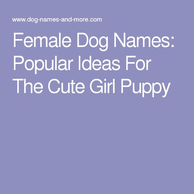 Female Dog Names: Popular Ideas For The Cute Girl Puppy