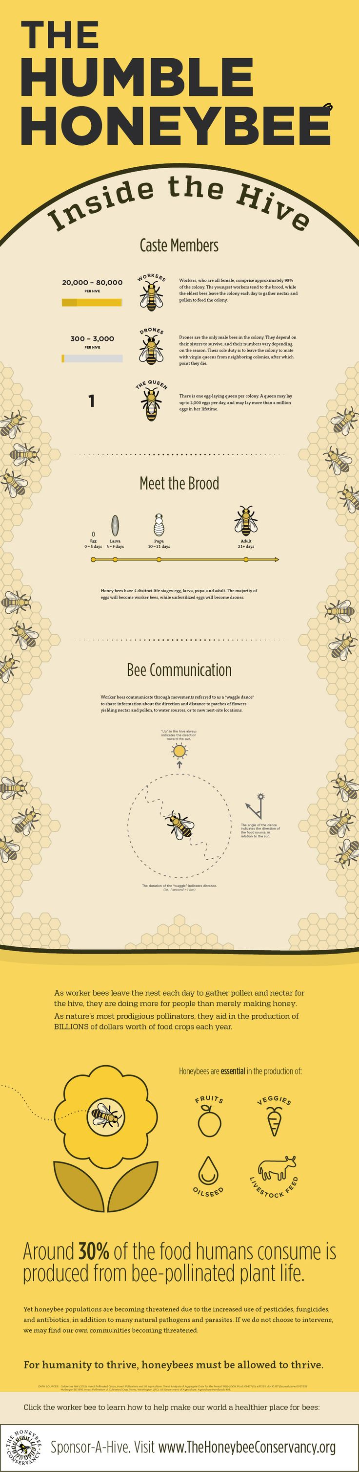 An interview with Hayden Loos, the designer of this bee infographic Haydentook some time to answer some questions about this bee infographic, his interest in bees and how he takes his honey. You can see more of Hayden's designs at www.haydenloos.com 1. What led you to create this bee infographic? I created this bee infographic …