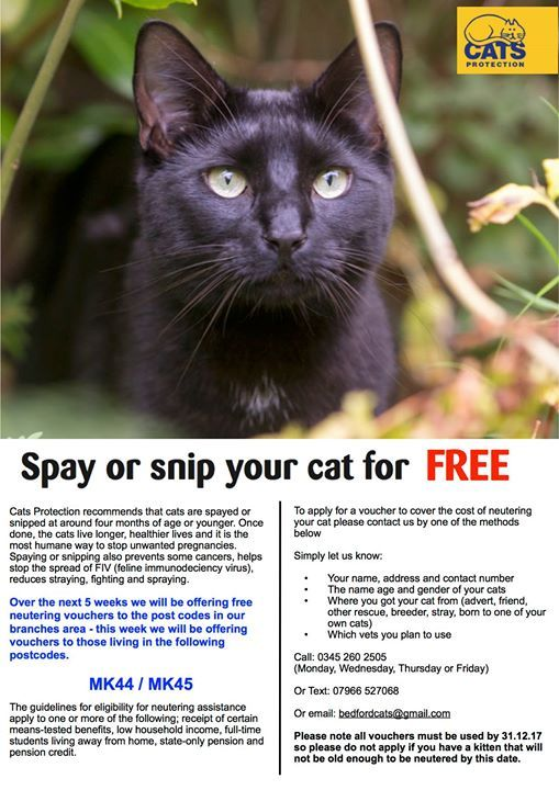 Cats Protection recommends that cats are spayed or snipped at around four months of age or younger. Once done the cats live longer healthier lives and it is the most humane way to stop unwanted pregnancies. Spaying or snipping also prevents some cancers helps stop the spread of FIV (feline immunodeciency virus) reduces straying fighting and spraying.  Over the next 5 weeks we will be offering free neutering vouchers to the post codes in our branches area - this week we will be offering…