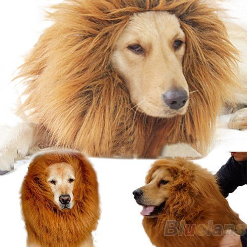 Dog lion mane. This is going to look so cute on my dog. #Halloween