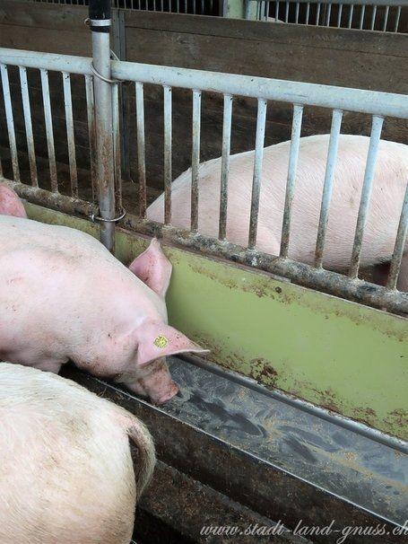 Futtermittel werden zu einem grossen Teil importiert. In Schweizer Fleisch steckt deshalb gar nicht so viel Fleisch.