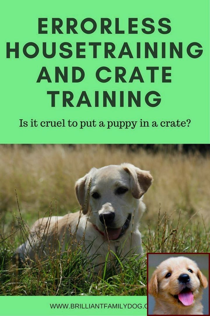 House Training A Puppy In 7 Days And Dog Behavior Digging Bed