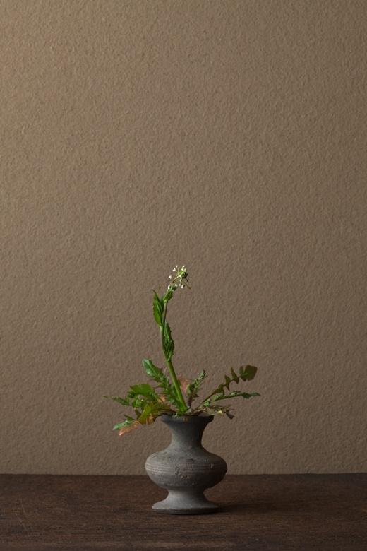 2012年4月9日(月) ペンペン草のように何でもない草が声をあげる季節、それも春です。 花=薺(ナズナ) 器=須恵器壺(古墳時代)