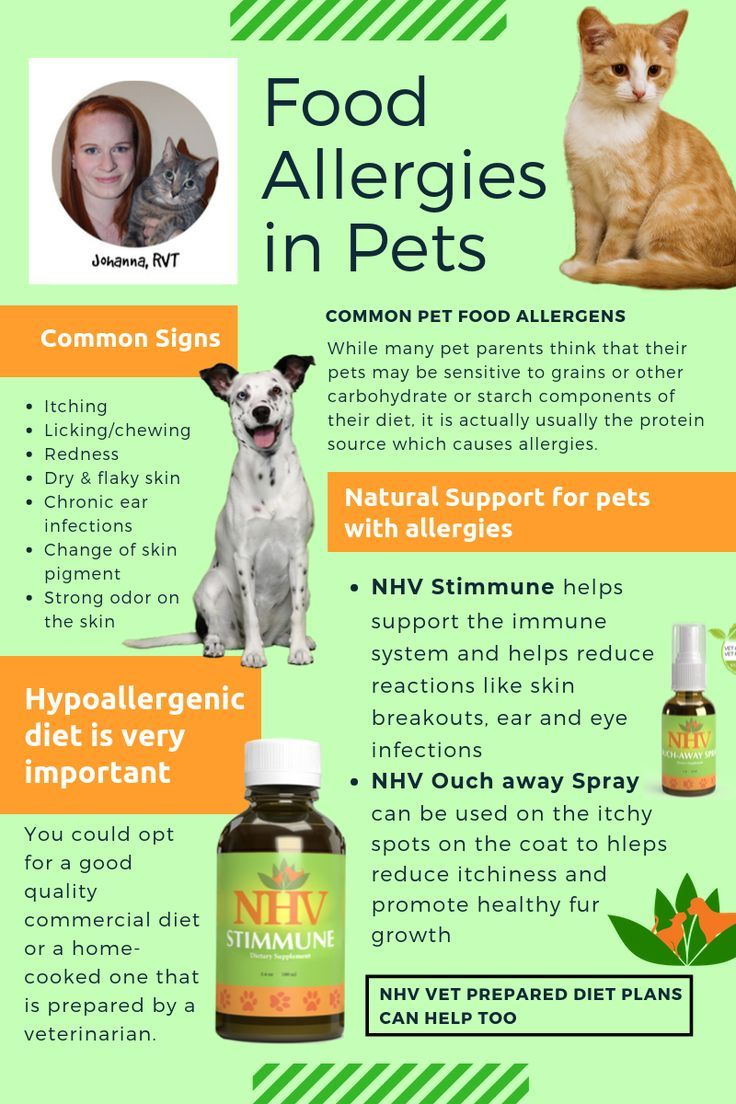 Vet Tech Rounds Food Allergies In Dogs And Cats Signs Of Food Allergies Dog Cat Healthy Pets