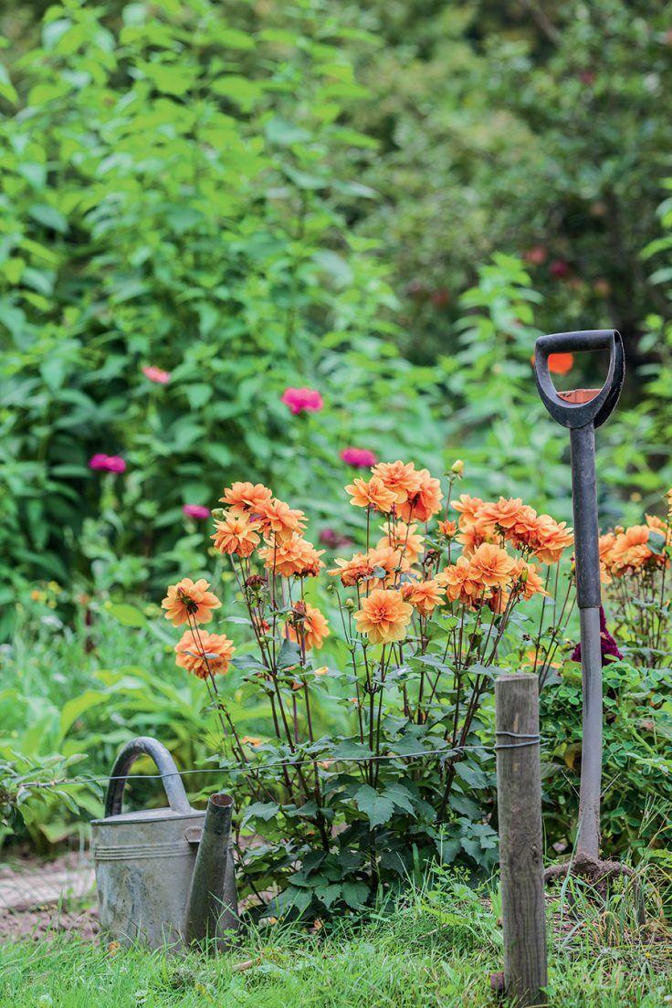 Que faire au jardin en octobre ? | Fleurs jaunes et oranges ...