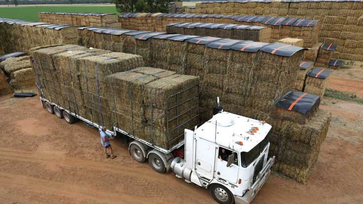 A CONVOY of trucks, expected to stretch across more than 50 kilometres, is to transport more than 5000 round and square bales.   Read more :