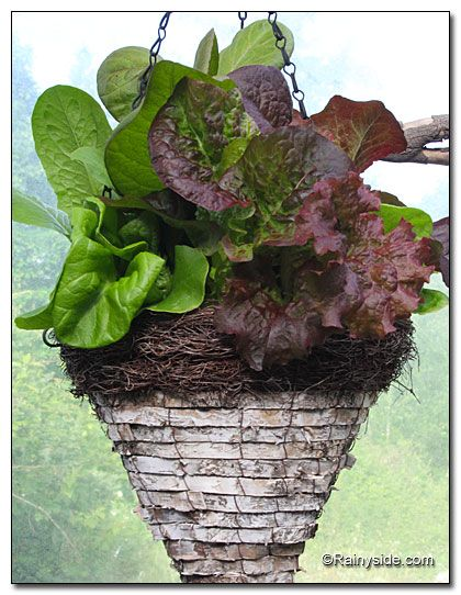 Incredible Edibles in the Air: Herbs Baskets, Baskets Fillings, Baskets For, Incredible Edible, Parties Ideas, Hanging Baskets Hmm, Teacher, Party Ideas