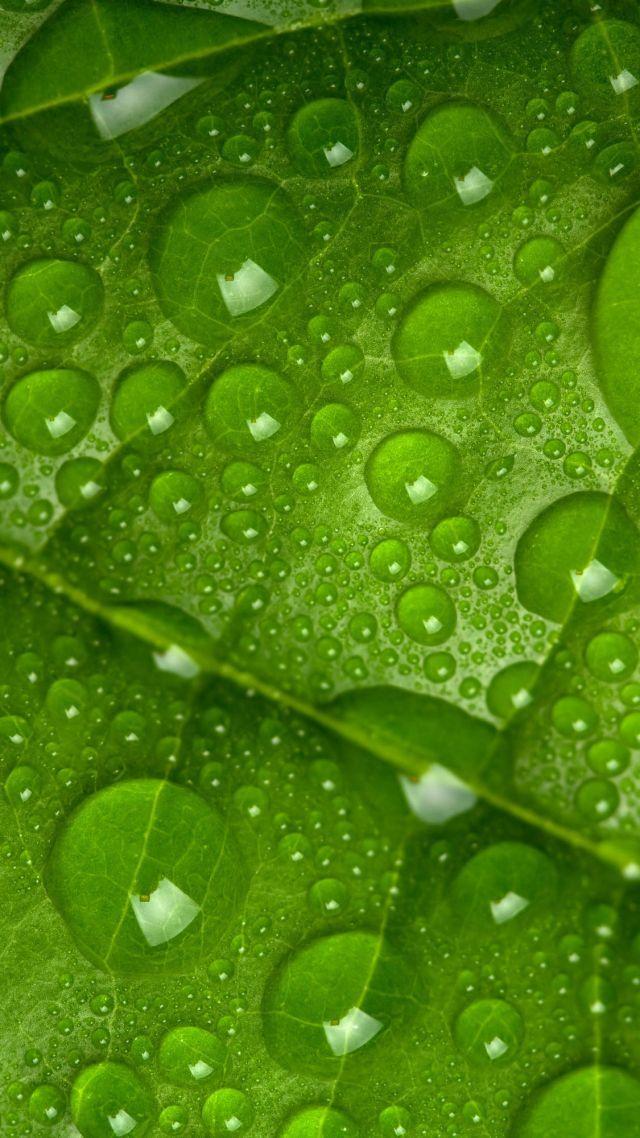 Leaf Drops Green 4k Vertical Makrosemki Botanicheskie