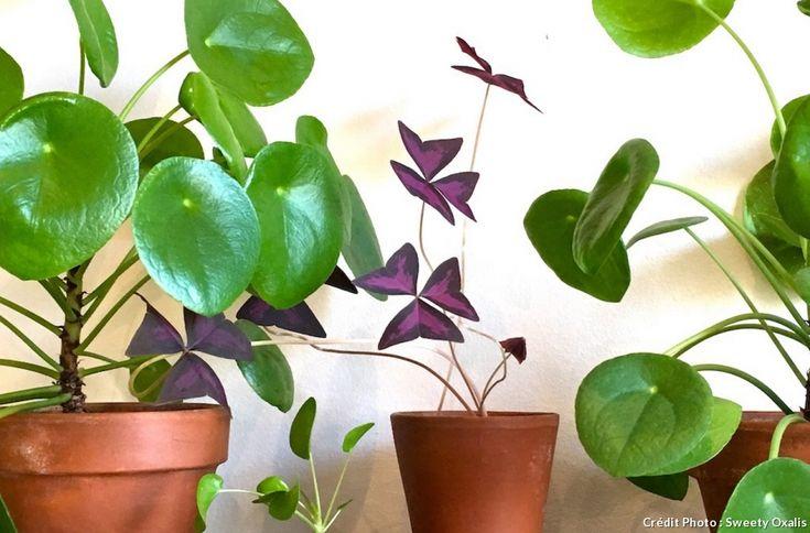 les 240 meilleures images du tableau plantes d 39 int rieur sur pinterest plantes d 39 int rieur. Black Bedroom Furniture Sets. Home Design Ideas