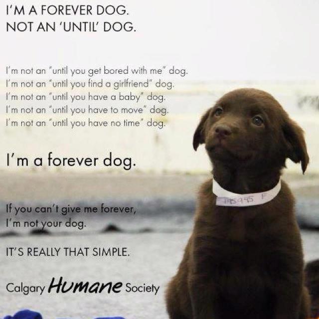 Forever dog.