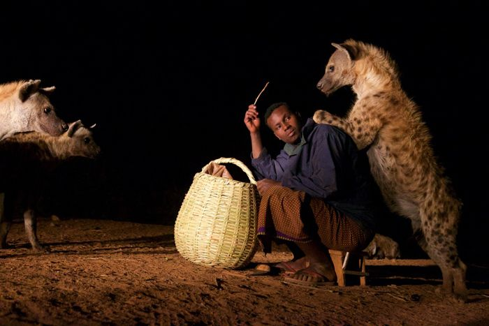 Yusuf Mume Saleh has a special bond with Harar's hyenas and has taught his son how to live in harmony with the creatures too. Read their story.
