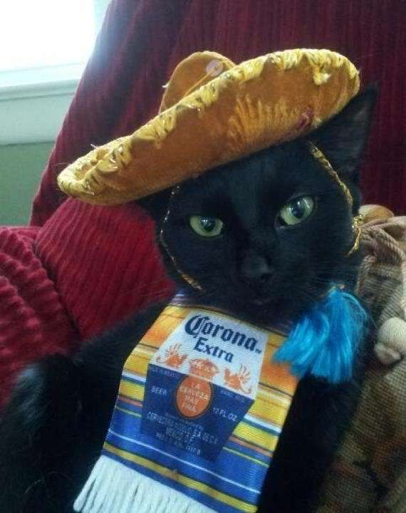 Corona Kitty Funny Cat Pictures Cat Costumes Crazy Cats