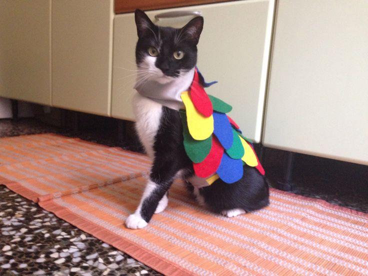 Cat-parrot costume