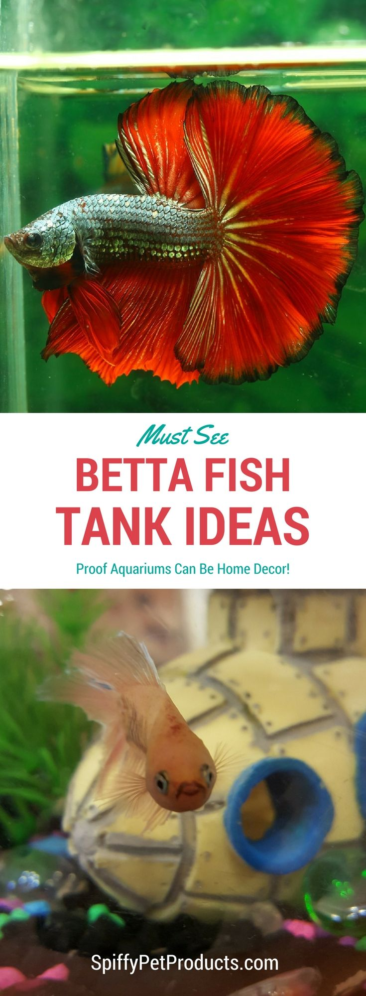 6996 best home decor images on pinterest home ideas my for Cat proof fish tank