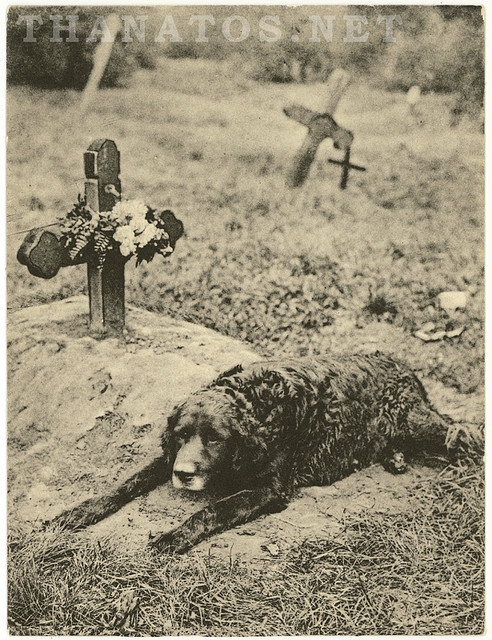 See the movie HASHI; true story (with Richard Gere). In Scotland I saw a famous dog statue next to a pub where the owner and his dog are buried. The dog never left the grave site for years after the owner died so they put up a monument with the story.