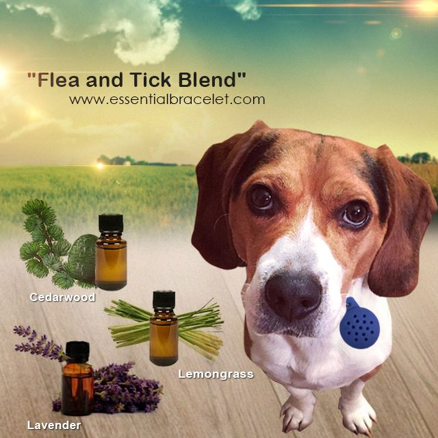 Add This Blend To Your Essential Oil Pet Diffuser From Essential Bracelet To Keep Fleas And