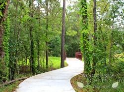 An inspiring shot from the natural walkway going into the pedestrian bridge - Gallery - Woodlands Realty Pros