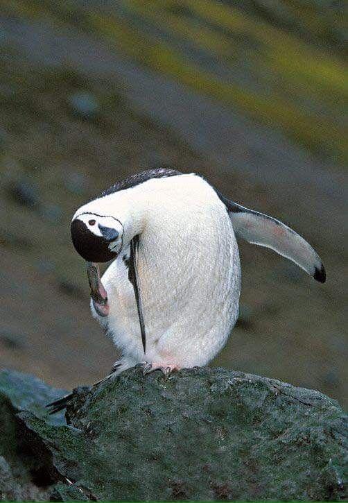 Pinguin-Planet