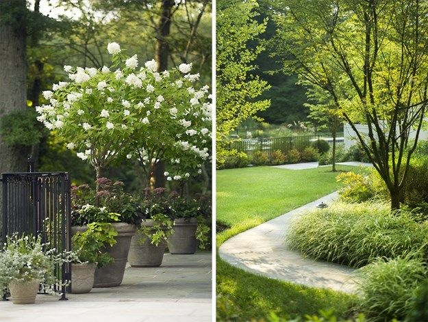 Left: Enormous planters with hydrangea trees give spatial definition to the rear bluestone patio. Right: The bluestone walkway is softened with masses of Carex 'Ice Dance'. Photos by: Neil Landino.