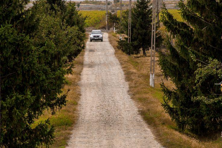 Road to Domeniile Sahateni winery.  https://www.facebook.com/AureliaVisinescuWines