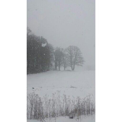 Bøkeskog, Åsgårdstrand