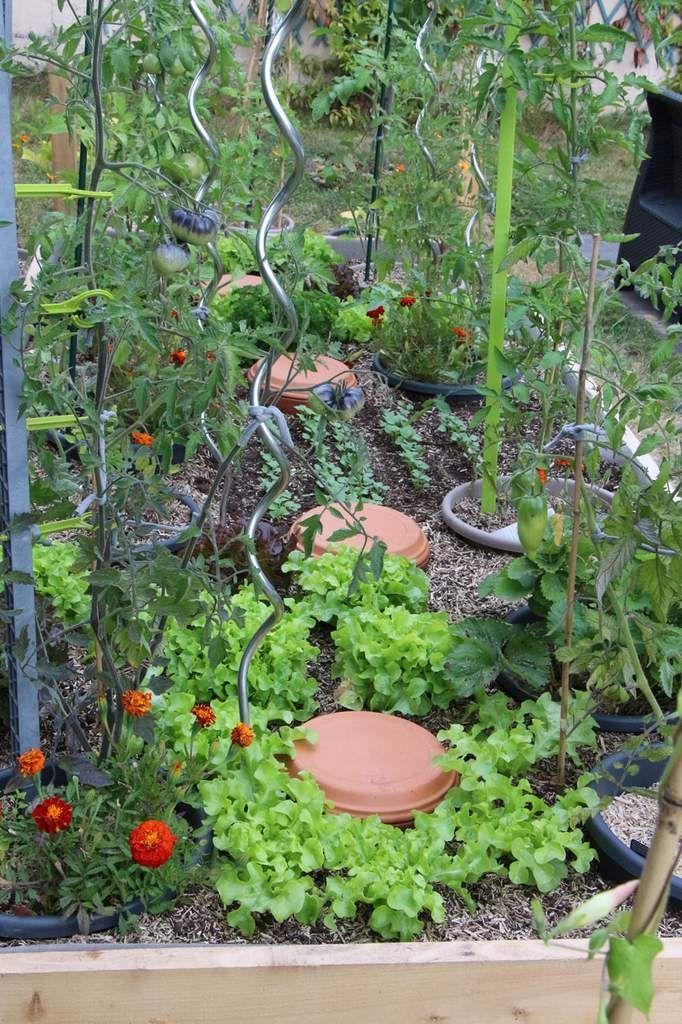 Des plantes qui prospèrent autour des Ollas (cette picture date de moins d'un…