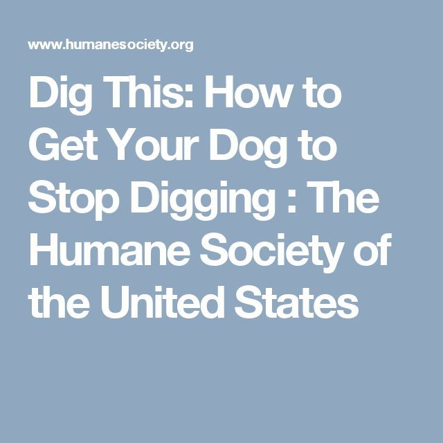 Dig This: How to Get Your Dog to Stop Digging : The Humane Society of the United States